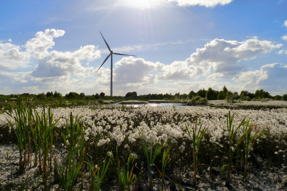 000014_Bog Cotton & Turbine_667